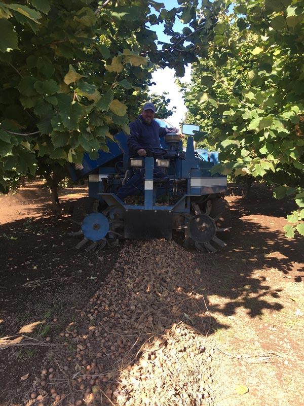 Oregon Hazelnut Grower